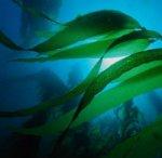Гиганты моря