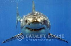 Тайна белой акулы