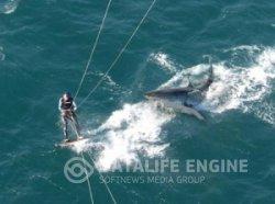 Нападение белой акулы