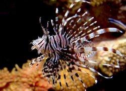 Самые ядовитые обитатели океана