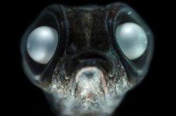Самые необычные обитатели океанских глубин