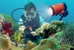 Коралловый риф – рай для дайвинга