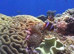 Кораллы – древнейшие организмы океана